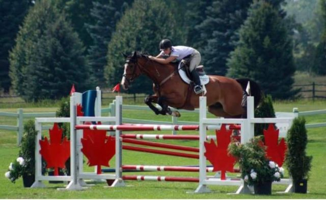 hunter, jumpers, showjumping, eventing, perfectionism